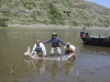 Snake River Sturgeon